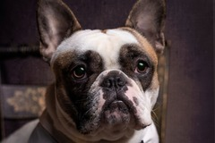 Package: Pet Lifestyle Photography - Custom Order: Owen